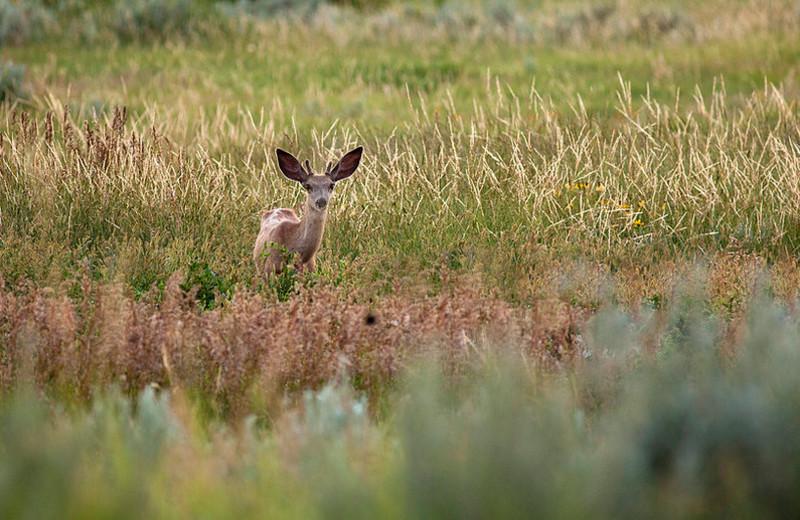 Deer at Eagle Ridge Lodge.