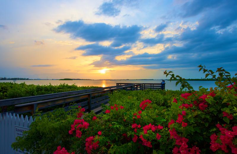 Scenic view at Parrot Key Resort.