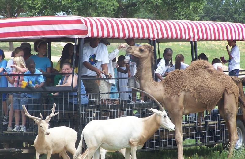 Safari tour at The Exotic Resort Zoo.