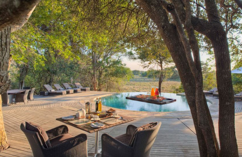 Outdoor pool at Phinda Private Game Reserve.
