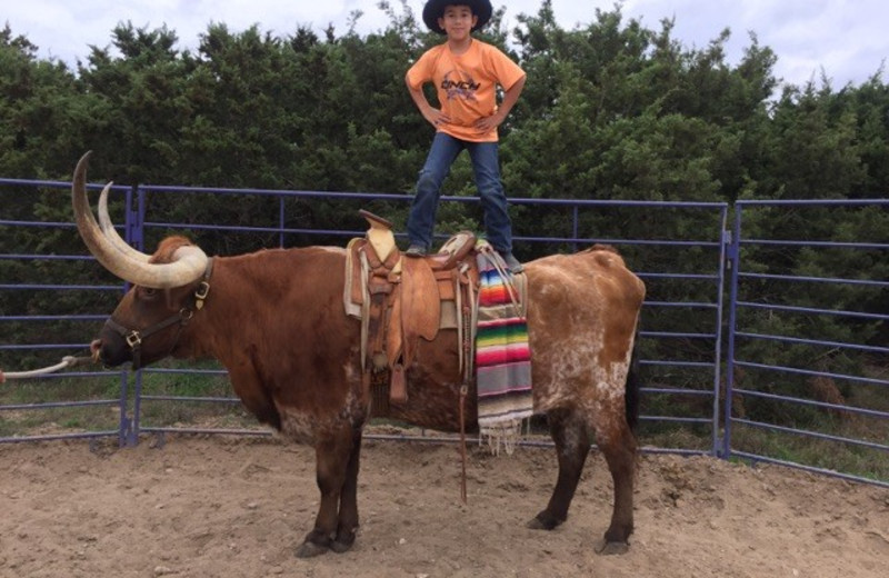 Rodeo at Twin Elm Ranch.
