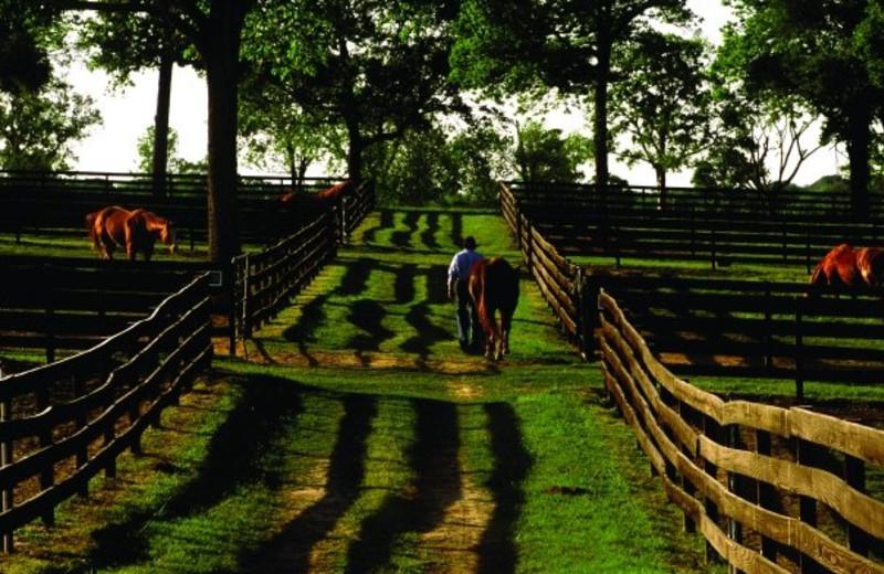Horse Stables at Inn at Dos Brisas