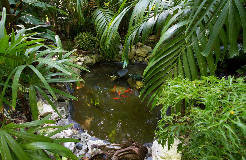 Koi Pond at The Gardens Hotel
