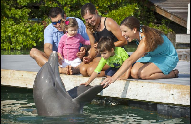 Dolphin encounters at Hawks Cay Resort.