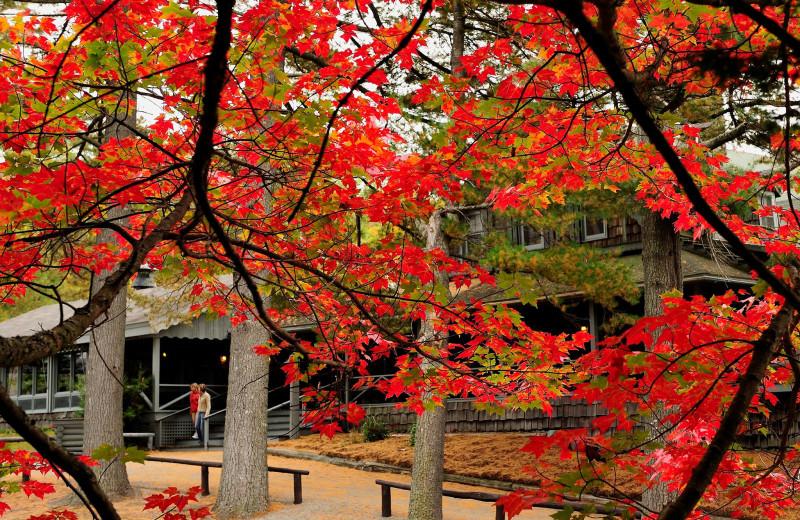 Fall leaves at Elk Lake Lodge.