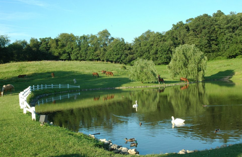Pond at Guggisberg Swiss Inn/Amish Country Riding Stables.