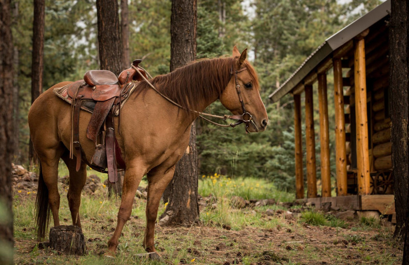 Horse at Hidden Meadow Ranch.