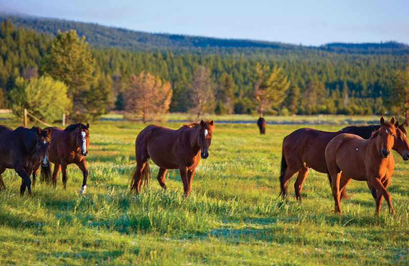 Happy horses awaiting the trail rides at Sunriver Stables