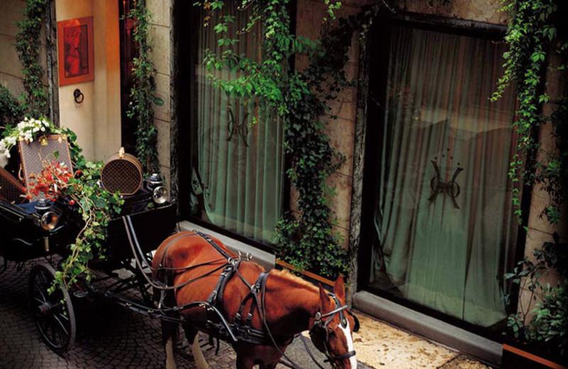 Horse outside Hotel Gabbia d'Oro.