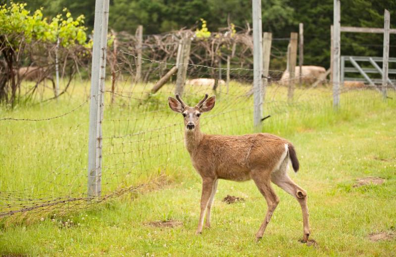 Deer at Half Moon Bar Lodge.
