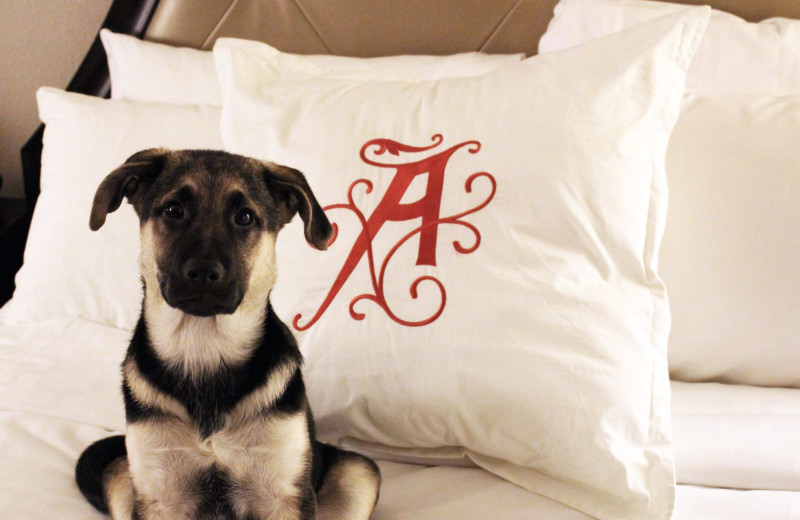 Pets welcome at The Algonquin Resort St. Andrews by-the-Sea, Autograph Collection.