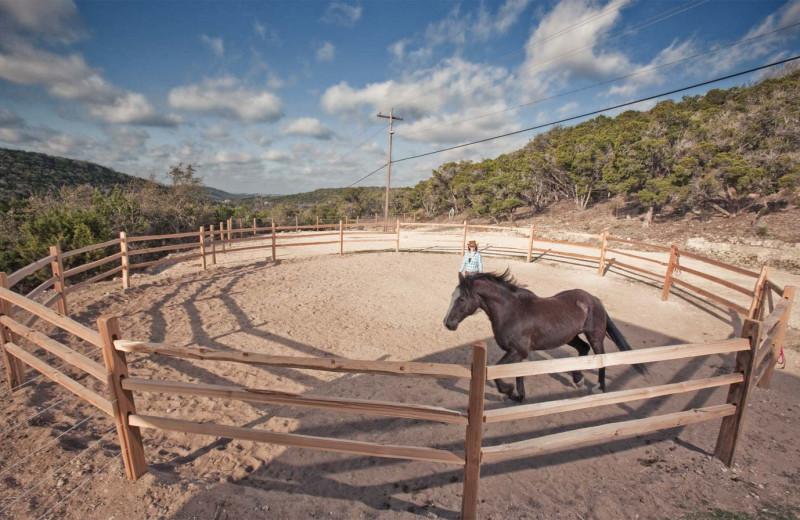 Horses at Travaasa Austin.