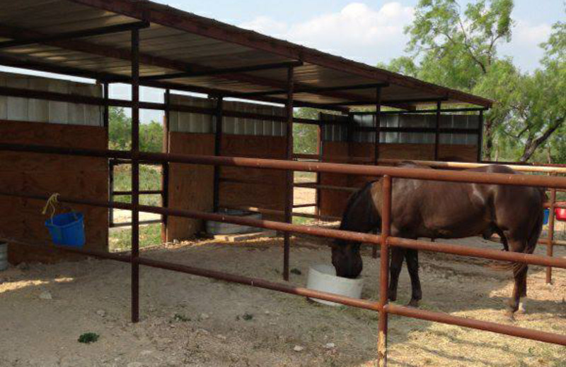Horses at Spanish Dagger Ranch.