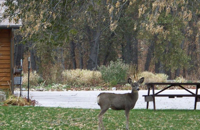 Wildlife at Canyon Lake Resort.