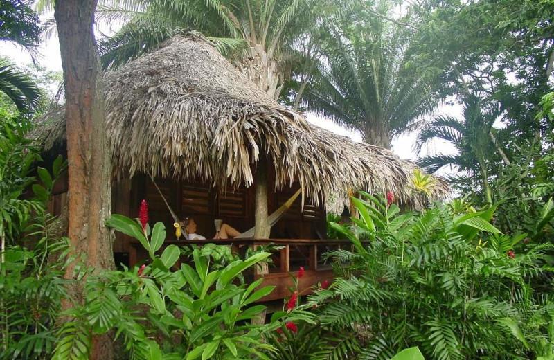 Exterior at Lamanai Outpost Lodge.