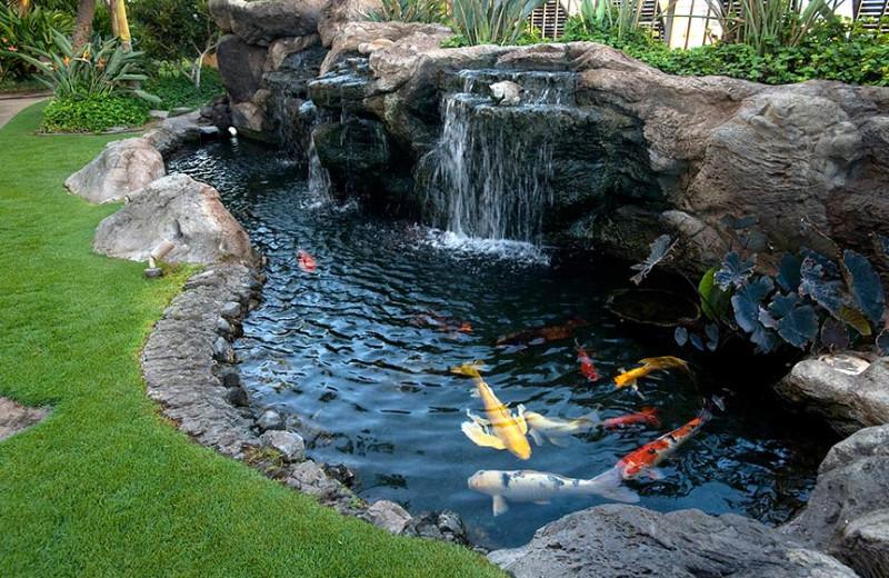 Koi pond at Sugar Beach Resort.