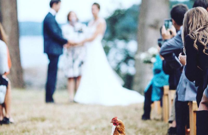 Wedding at Pebble Cove Farm.