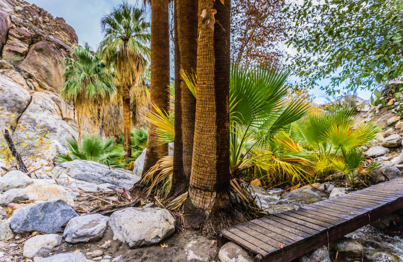 Hiking near Padzu Vacation Homes - Palm Springs