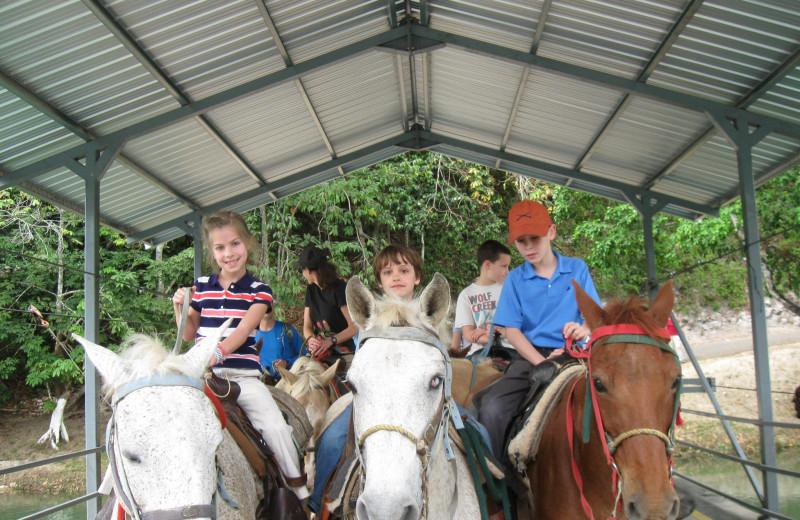 Horses at DuPlooy's Jungle Lodge.