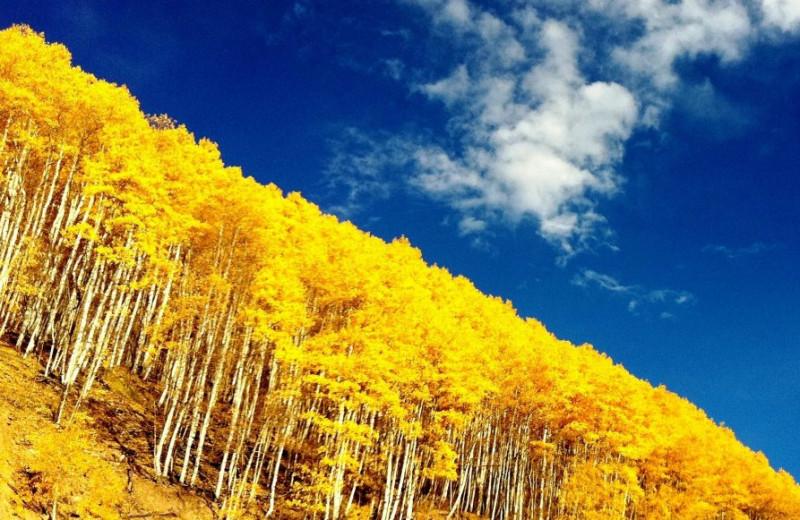 Fall at East West Resorts Beaver Creek.