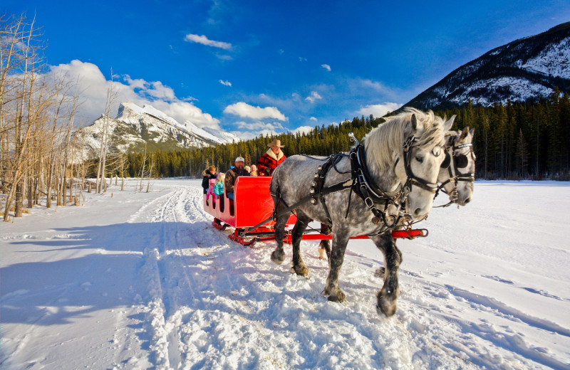 Sleigh ride at Banff Trail Riders.