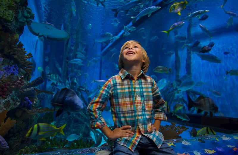 Aquarium at TradeWinds Island Grand.