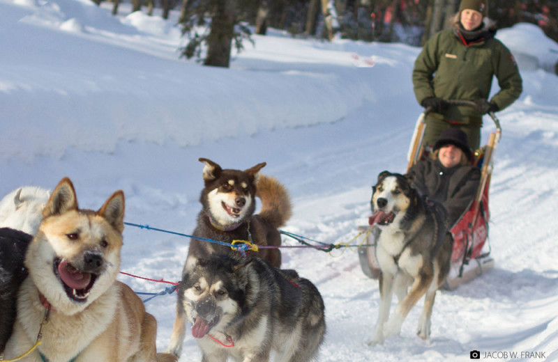 Dog sled at Waterville Valley.