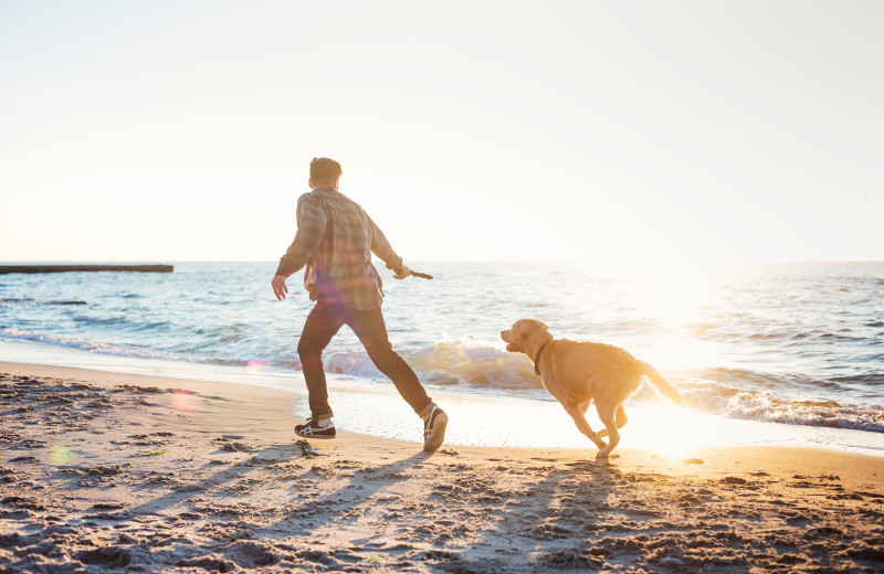 Pets welcome at Beachhouse Vacation Rentals.