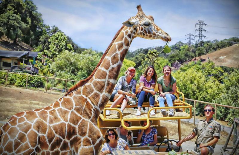 Zoo near Woodfield Properties.