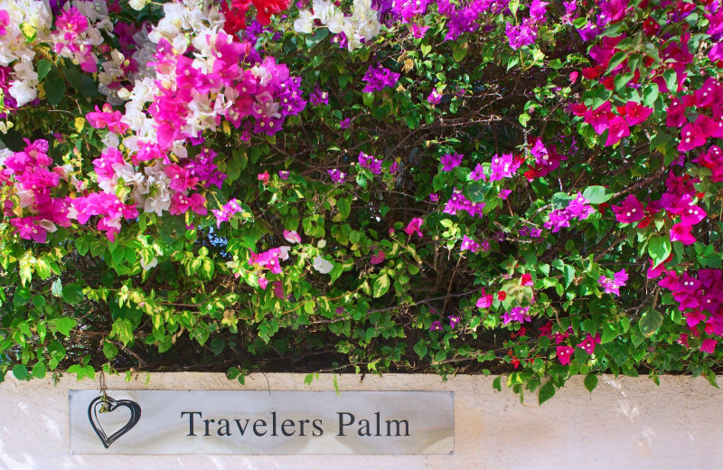 Garden at Travelers Palm Key West.