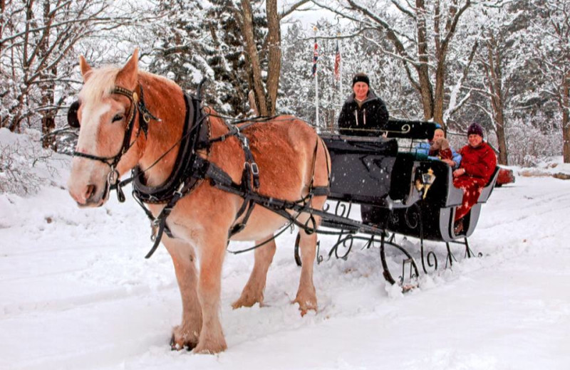 Winter carriage ride at Farm by the River Bed & Breakfast.