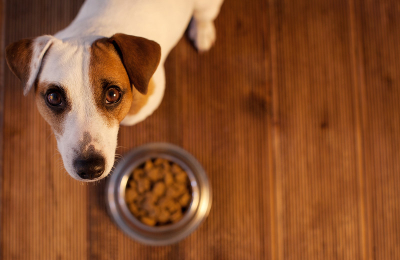 Pets welcome at Natural Retreats Great Smoky Mountains.