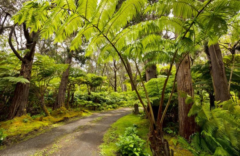 Walking path at Hale 'Ohu Bed & Breakfast.