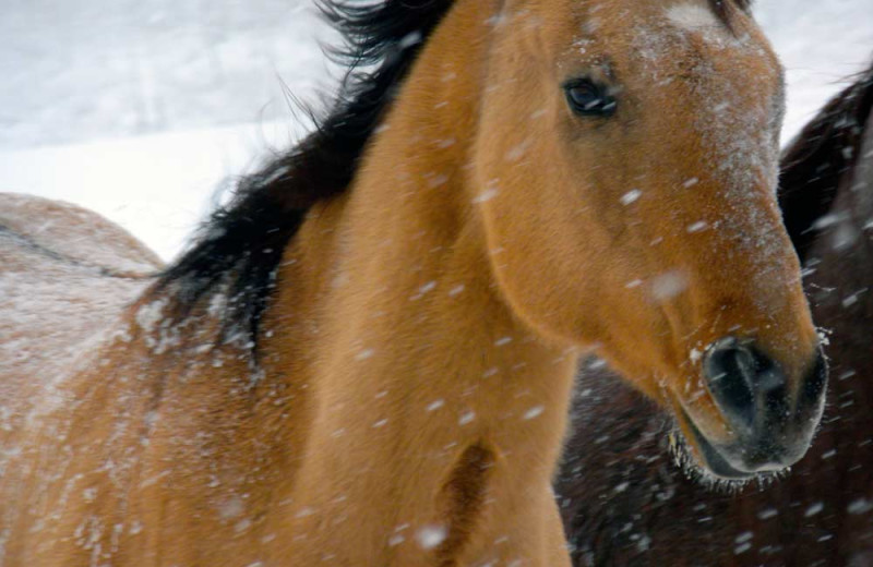 Horses in the snow at Vista Verde Ranch.
