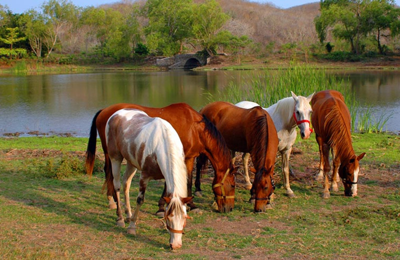 Horseback riding at Las Alamandas.