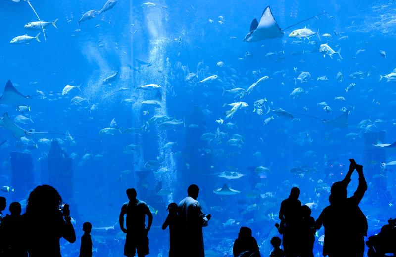 Aquarium near Auntie Belham's Cabin Rentals.
