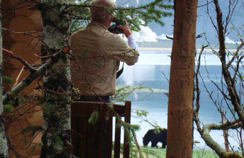 Bear watching from cabin at Kenai Fjords Glacier Lodge.