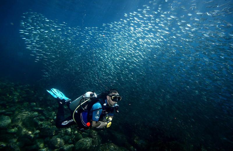 Diving at Club Hotel Cantamar.