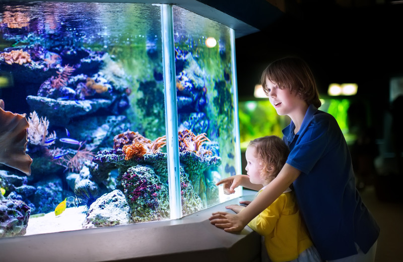 Aquarium near Premier Vacation Rentals @ Smith Mountain Lake.