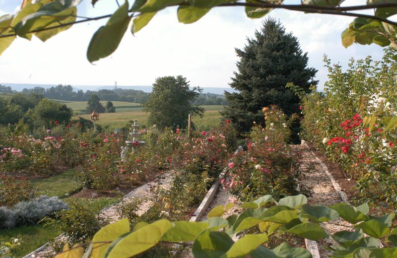 Garden at Annville Inn.
