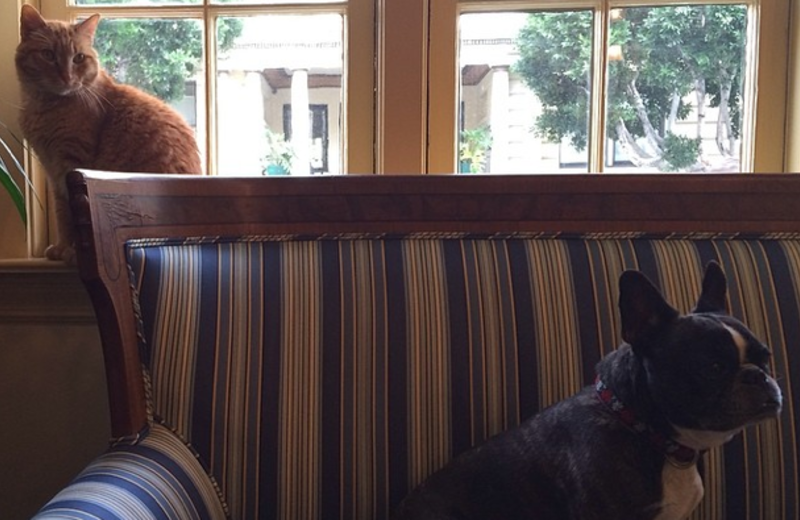 Hotel pets at Golden Gate Hotel.