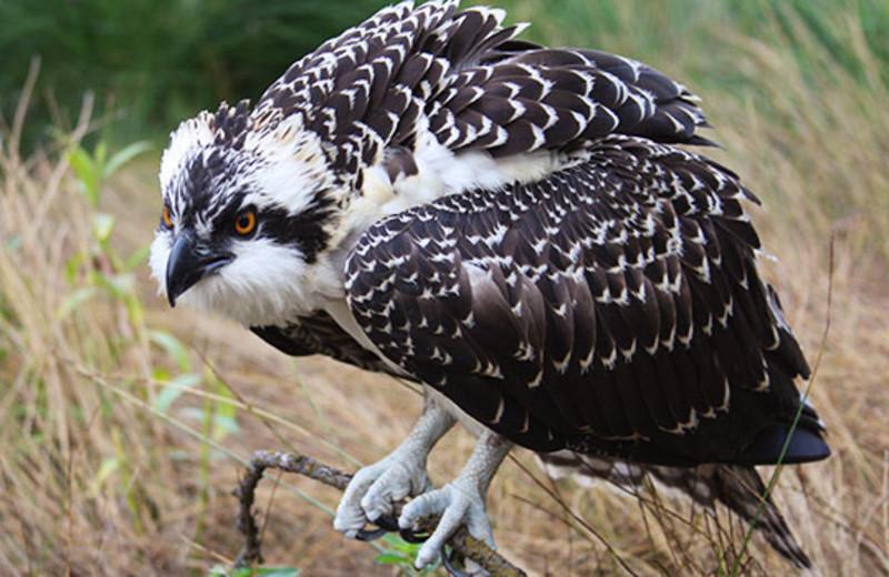 Bird at Montana River Lodge.