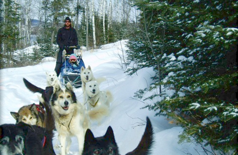 Dogsleds at Gunflint Lodge.