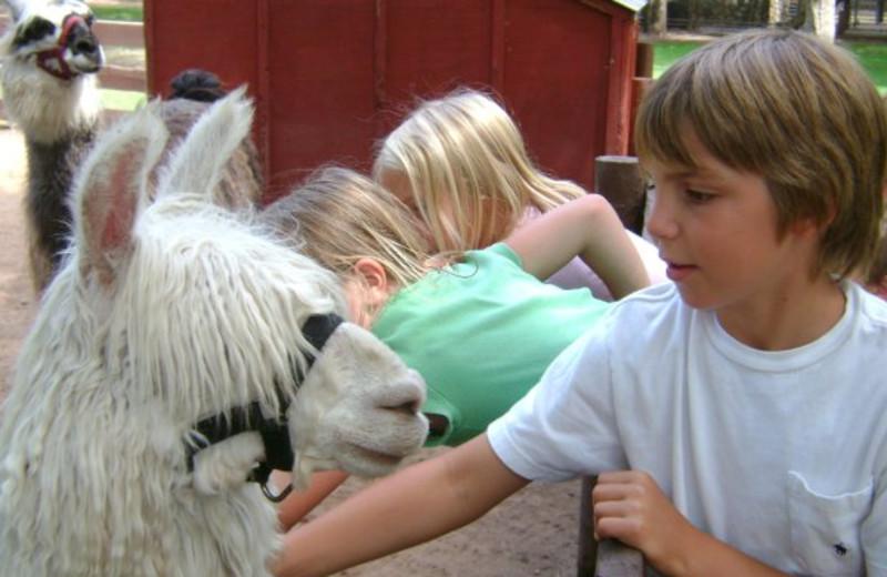 Petting zoo near Recreational Rental Properties, Inc.