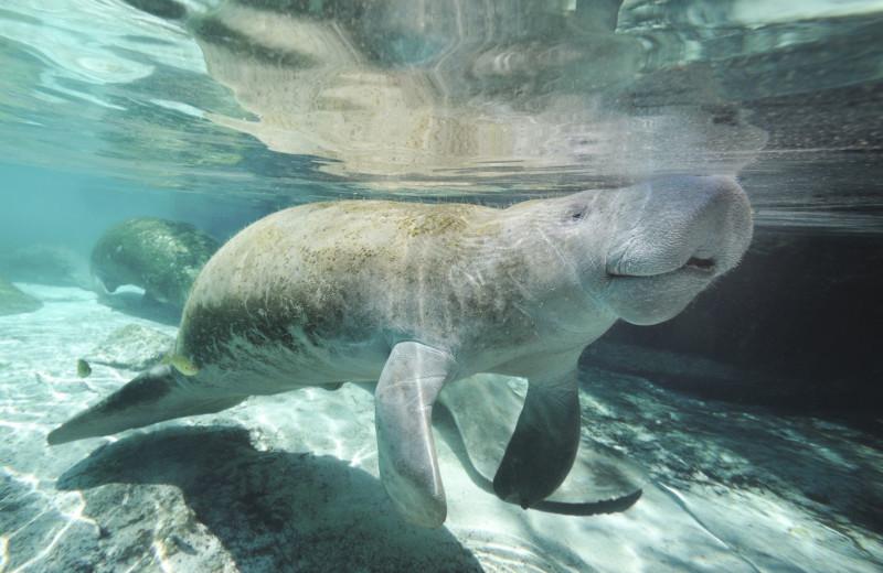 Sea life at Oceans Edge Key West Resort