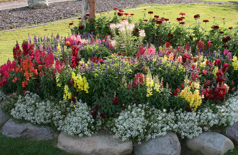Garden at Glaciers' Mountain Resort.