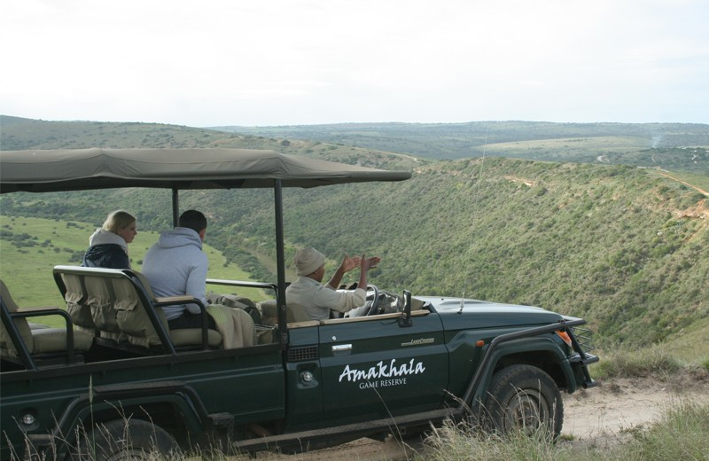 Safaris at Amakhala Game Reserve.