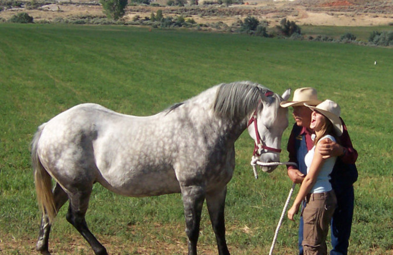 Horses at K3 Guest Ranch.