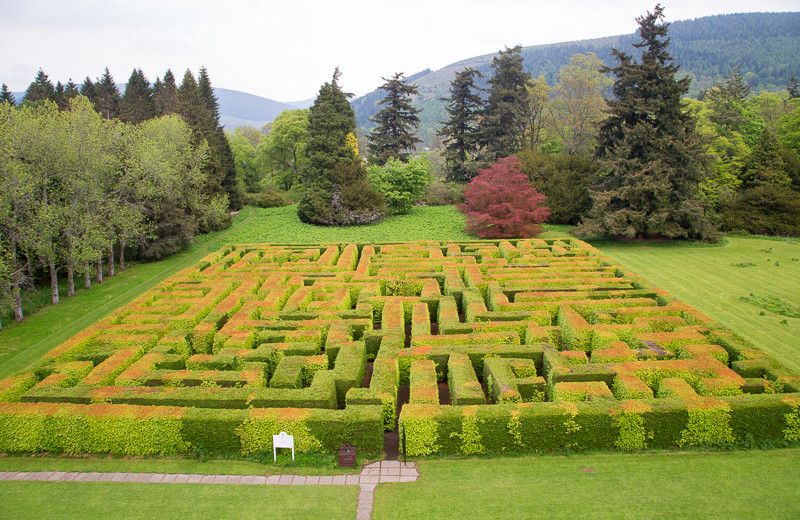 Bush maze at Traquair House.