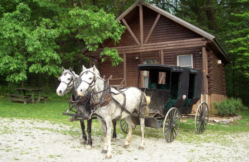 Amish carriage ride at Sunset Ridge Log Cabins